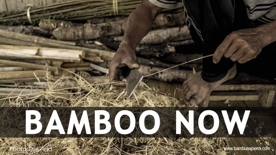 Bamboo Now